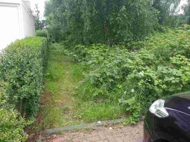 Foto eines Details des Bewuchses auf dem Teil der Grünfläche Auerberger Allee zwischen Berner Str. und Wiener Str.